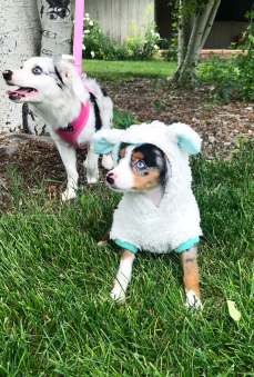 Milo in our lamb costume!