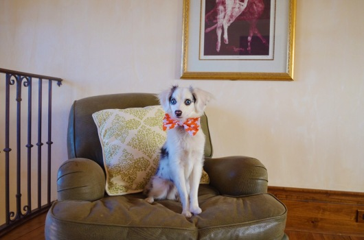 Casper in his Halloween bow tie!