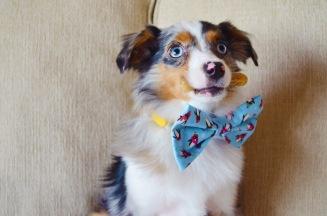 Porky in penguin bow tie!