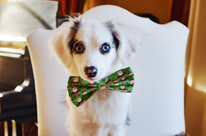 Casper in Santa Claus bow tie