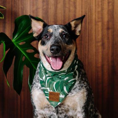 Nice-Digs_Monstera-Dog-Bandana_Square-03_1000x