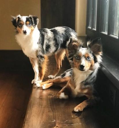 Porkchop and Luna