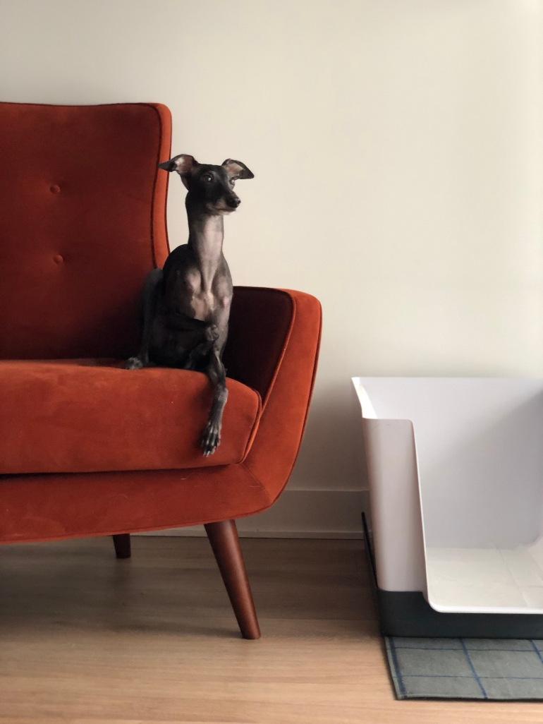 doggy_bathroom_indoor_potty_06.jpg