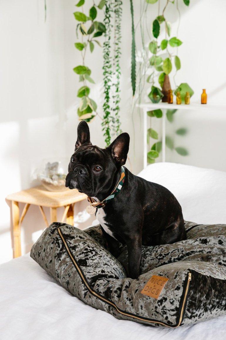 Nice-Digs-Chiaro-Dog-Collar_03