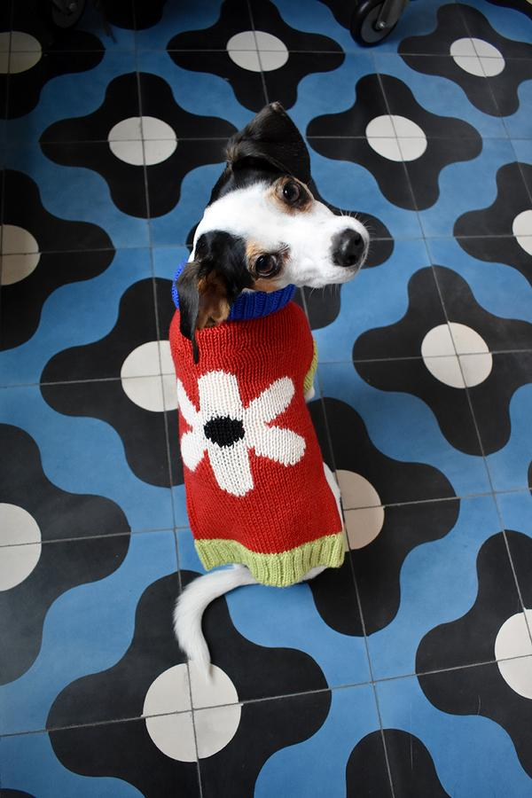 floral_dog_sweater_7_600x.jpg
